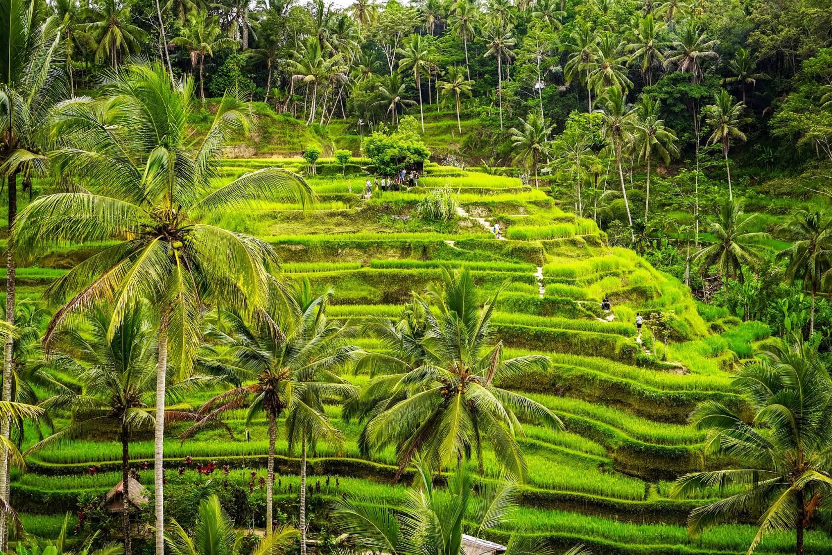 Bali rizières en terrasse