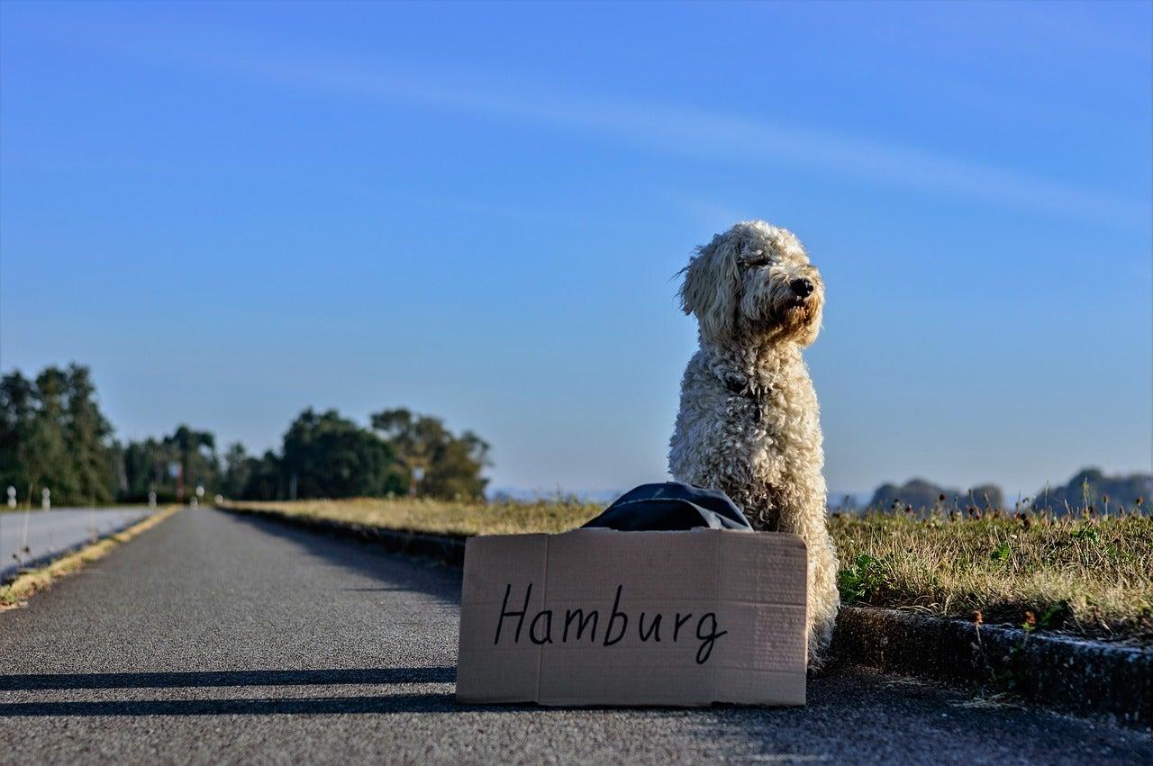 chien autostop