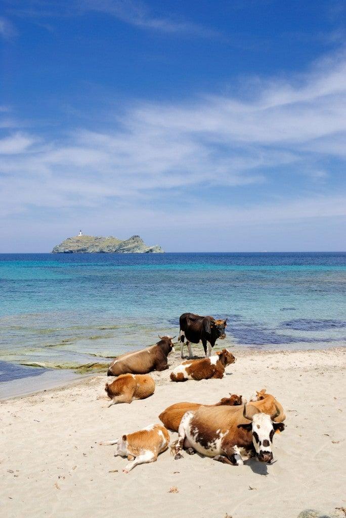 Plage de Barcaggio en Corse