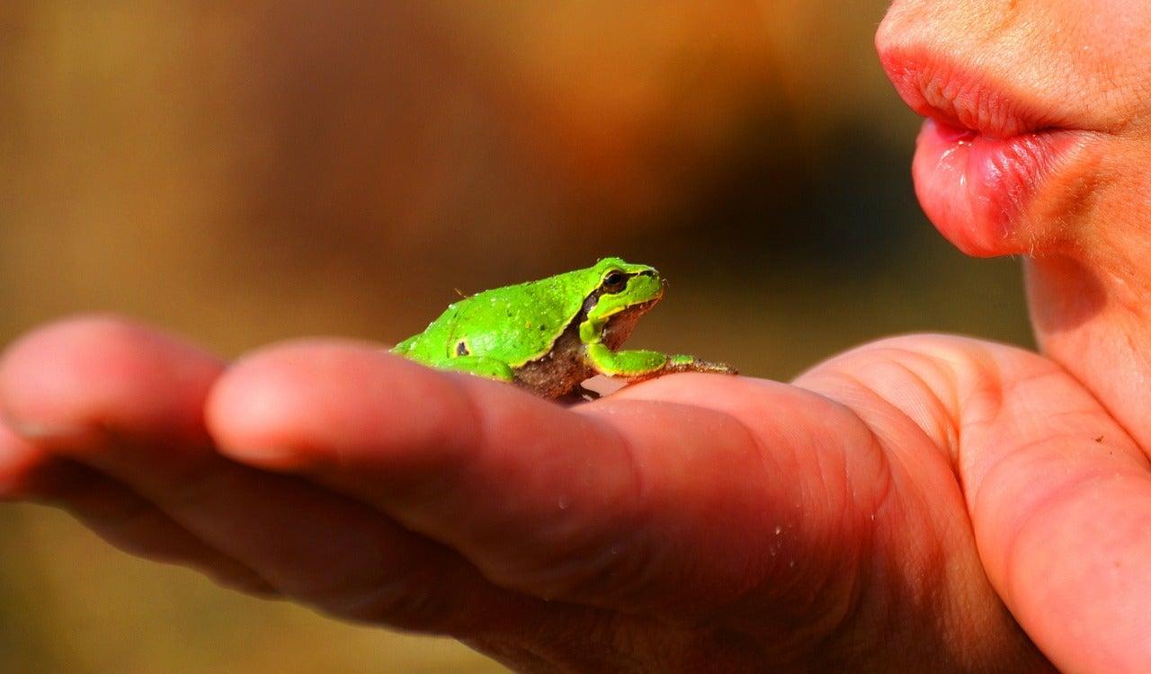 grenouilles - blog GO Voyages
