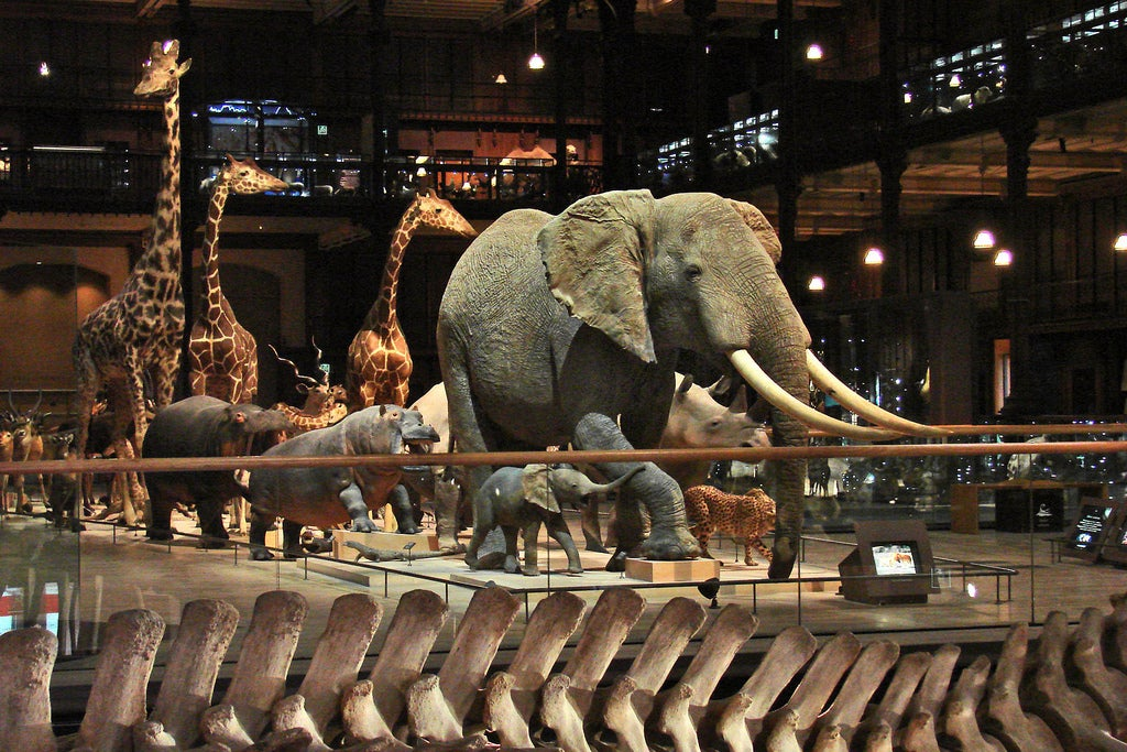 museum histoire naturelle - Jean-Pierre Dalbéra