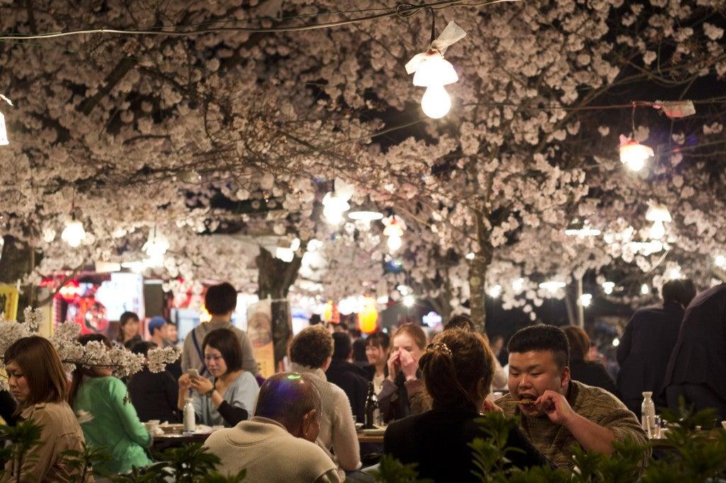 cerisiers en fleurs japon festival mars - blog go voyages