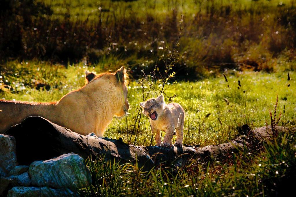 Source : Flickr (by Patrick Bouquet) - zoo en france - blog voyage Go Voyages