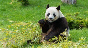Les 10 plus beaux zoos de France