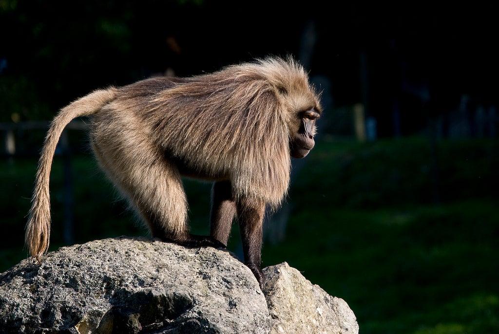 Singe au zoo cerza - zoo en france - blog voyage Go Voyages