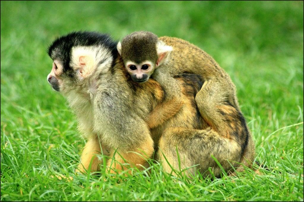Source : flickr (by myri_bonnie) - zoo en france - blog voyage Go Voyages