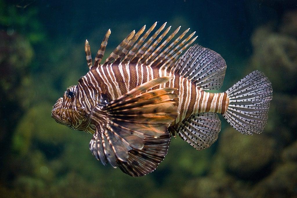 poisson aquarium Barcelone - blog GO Voyages