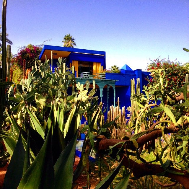 cactus jardin Majorelle Maroc - blog GO Voyages