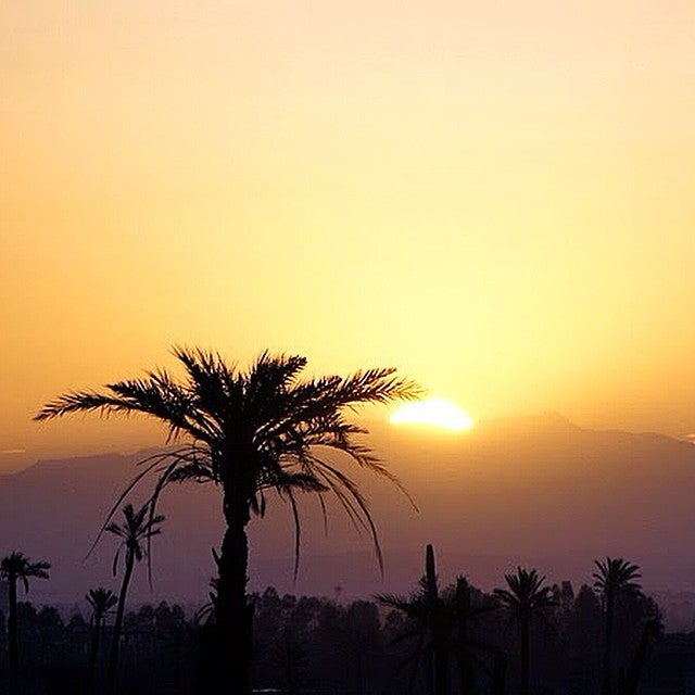 palmeraie Marrakech - blog GO Voyages
