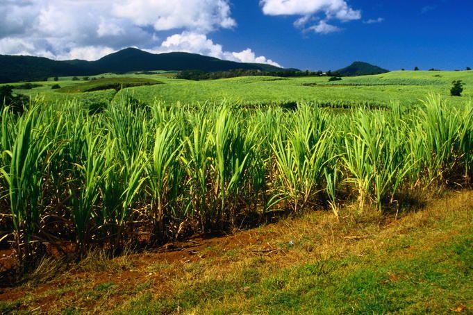 Plantations Guadeloupe