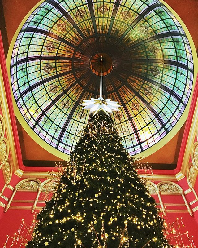 sydney christmas tree