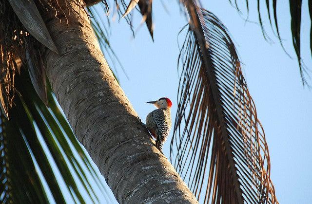 Guanahacabibes Cuba oiseau - blog go voyages