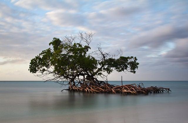 cayo levisa cuba - blog go voyages