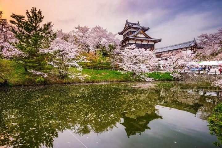 hanami cerisiers en fleurs japon avril - blog go voyages
