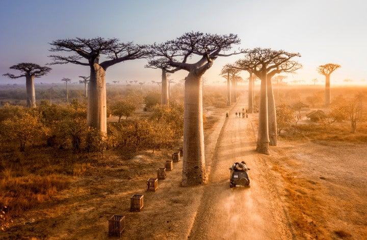 allee des baobabs madagascar - blog go voyages
