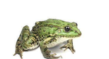 GO Voyages lance sa campagne de sensibilisation à la protection des grenouilles