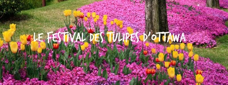ottawa tulipes_800300