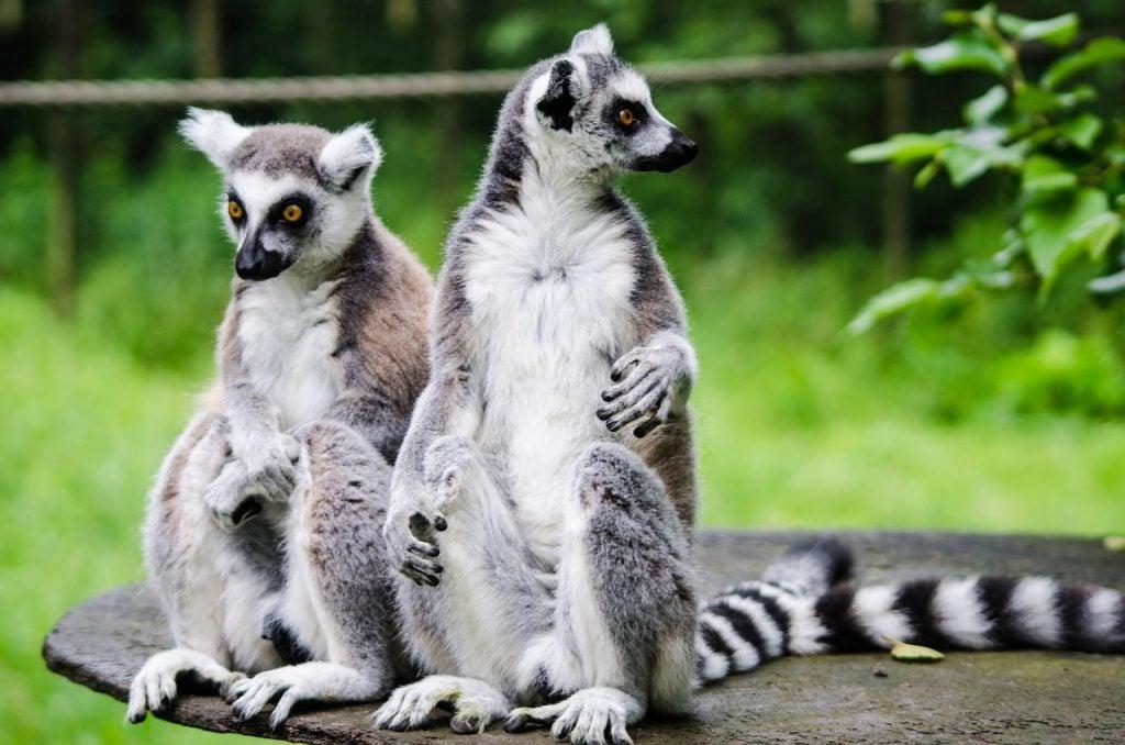 Madagascar - blog GO Voyages