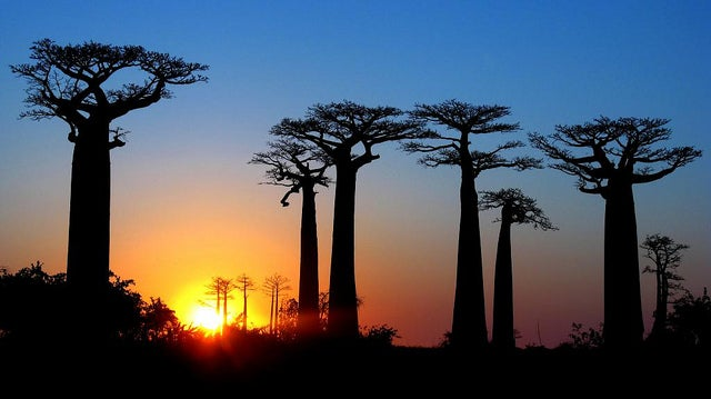 Allée des baobabs - blog GO Voyages