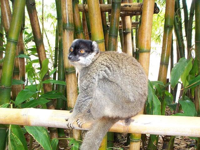 Lémuriens - blog GO Voyages