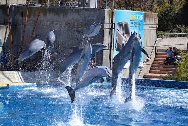 zoo-aquarium-decouvrir-madrid-en-famille