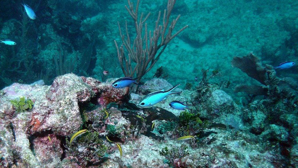 Plongée Punta Cana - blog GO Voyages