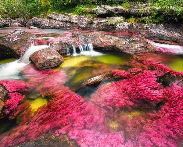 bassin naturels roses - blog go voyages