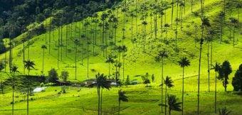 paysages palmiers - blog go voyages