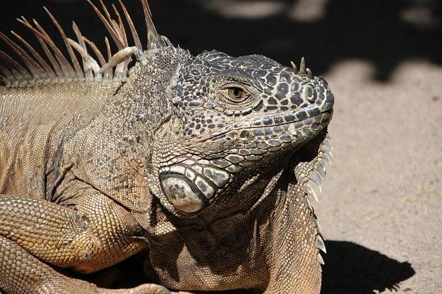 faune Punta Cana - blog GO Voyages