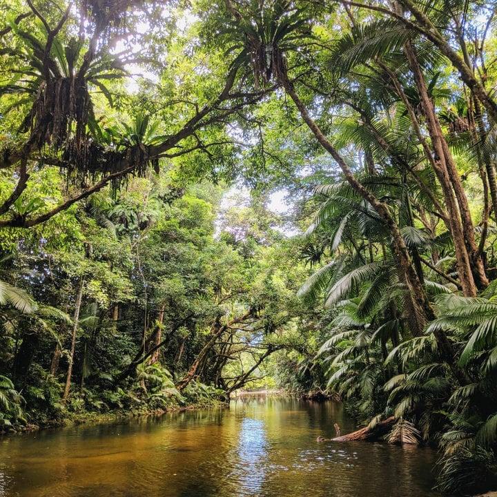 foret tropicale daintree australie - blog go voyages