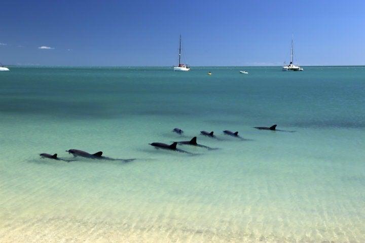 dauphins shark bay australie - blog go voyages