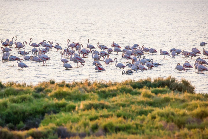 flamants roses delta de l'ebre - blog GO Voyages