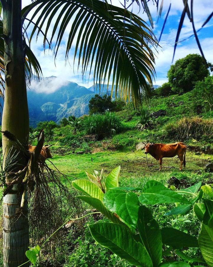 paysage camping aurère la réunion - blog GO Voyages