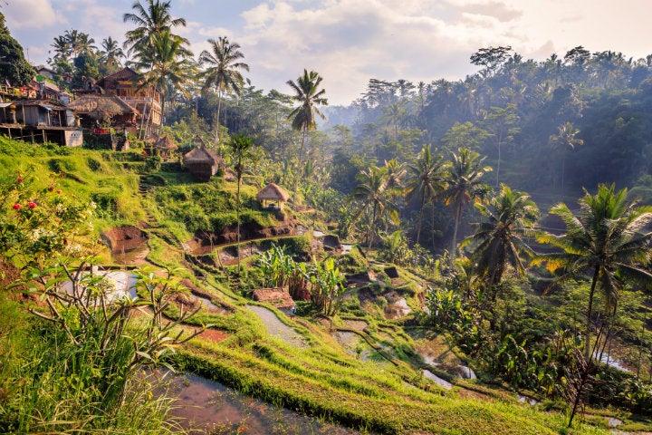 riziere en terrasses bali - blog GO Voyages