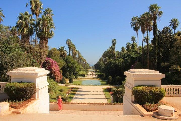 jardin botanique alger afrique - blog go voyages