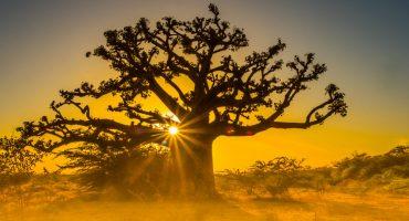 Afrique : 5 destinations à moins de 6 heures d'avion