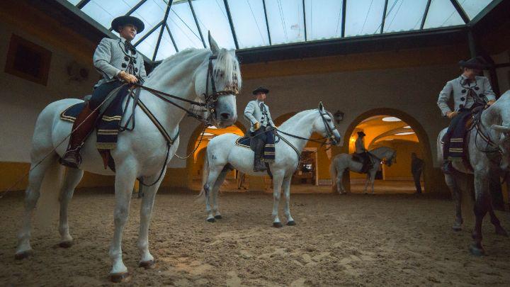 cavaliers école andalouse art équestre jerez de la frontera | spectacle chevaux andalousie