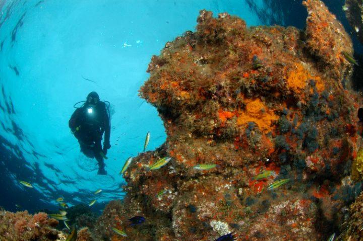 plongeur fonds marins corail portugal