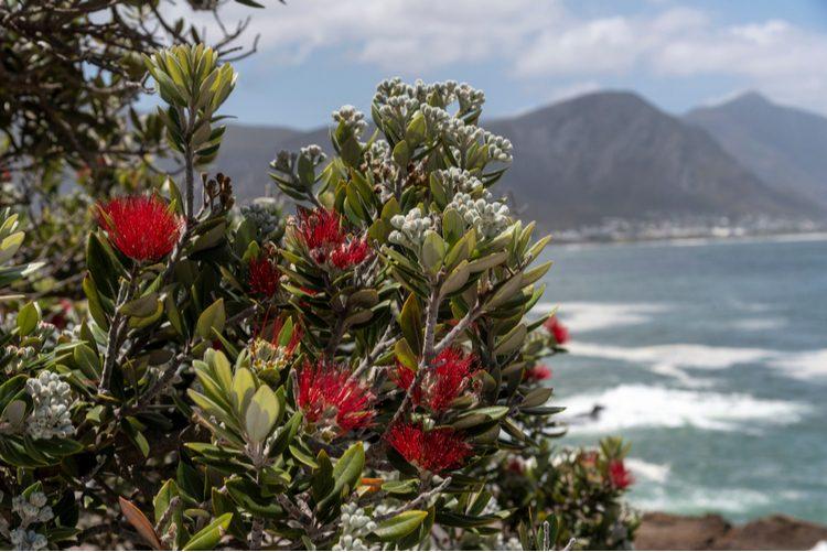 Noël en Afrique du Sud